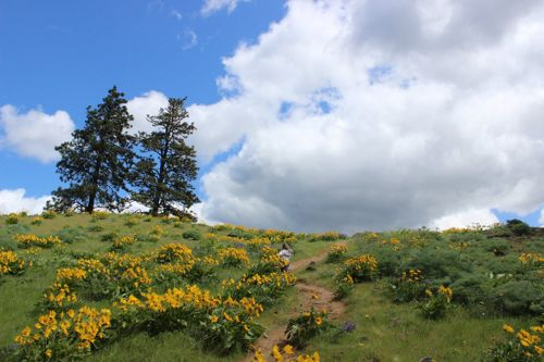 A young child walks along a hill trail beside yellow wildflowers.